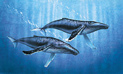 Humpback Whale Painting Framed Prints - Humpback Whales Framed Print by JQ Licensing