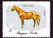 Postage Stamp Prints - Hungarian Gidran Horse Breed Print by Jim Pruitt