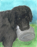Newfoundland Art Paintings - Hungry Newfoundland Dog Canine Animal Pets Art by Cathy Peek