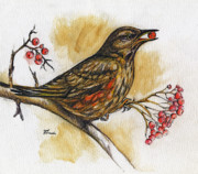 Bird Drawings Originals - Hungry Thrush by Angel  Tarantella