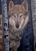Wildlifeartgallerie Galleries - Hungry Wolf