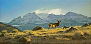 Hunter's Dream - Elk Print by Paul Krapf