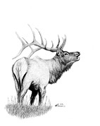 Rack Drawings - Hunters Target by Kayleigh Semeniuk