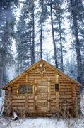 Log Cabins Art - Hunting Cabin in Alberta by Curtis Trent