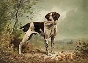 Hunting Dog Circa 1879 Print by Aged Pixel