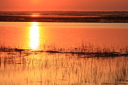 Hunting Island Tidal Marsh Print by Michael Weeks