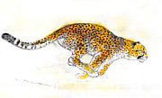 Leopard Running Framed Prints - Hunting-leopard Framed Print by Kurt Tessmann