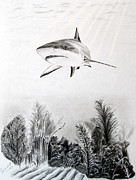 Shark Drawings - Hunting the Reef by Martine Harvengt