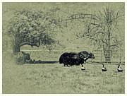 Yak Prints - Hurry Mildred Those Guys Look Dangerous Print by Diane Schuster