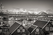 For Ninety One Days - Husavik Photo