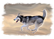 Pet Portraits Digital Art Posters - Husky at Play Poster by Kevin Pate