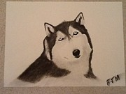 Charcoal Dog Drawing Drawings Posters - Husky  Poster by Brad Miller