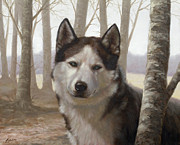 Husky Dog Paintings - Husky in the woods by John Silver