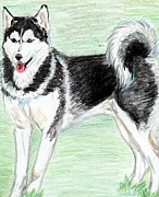 Dogs Drawings - Husky by Judit Dombovari