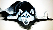Siberian Husky Paintings - Husky by Tia Maria - Fine Artist