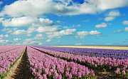 Spring Landscape Art - Hyacinth Heaven by Photodream Art