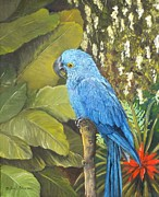 Gloria S Schloss - Hyacinth Macaw