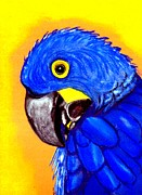 Macaw Pastels - Hyacinth Macaw by Olde Time  Mercantile