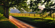 Gravel Road Framed Prints - Hyatt Lane - Cades Cove Framed Print by Thomas Schoeller