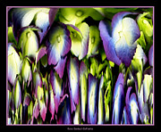 Rose Santuci-sofranko Posters - Hydrangea Abstract Poster by Rose Santuci-Sofranko