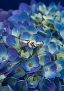 Lichen Prints - Hydrangea and Engagement Ring Print by Douglas Barnett