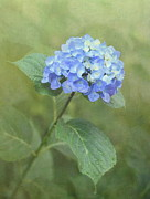 """textured Floral"" Photos - Hydrangea Blues by Angie Vogel"