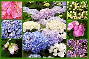 Margaret Newcomb - Hydrangea Flowers Collage