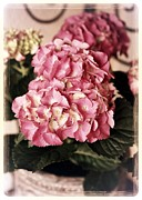 Soft Pink Posters - Hydrangea on the Veranda Poster by Carol Groenen