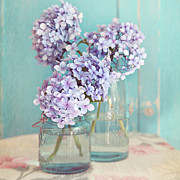 Mason Jars Photos - Hydrangeas in mason jars by Sylvia Cook