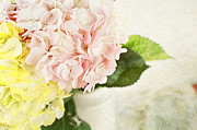 Cut Flowers Prints - Hydrangeas in Pastel Print by Stephanie Frey