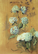 Golden Drawings Posters - Hydrangeas Poster by Paul Cesar Helleu