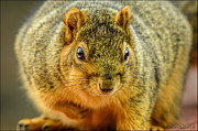 LeeAnn McLaneGoetz McLaneGoetzStudioLLCcom - Hypno Squirrel