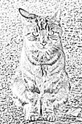 Top Art - Hypnotic Kitty by J D Owen