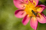 Honey Bee Photos - I am in Love by Reflective Moments  Photography and Digital Art Images