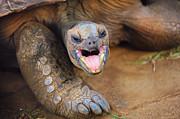 Jenny Rainbow - I am just Yawning