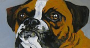 Boxer Dog Art Paintings - I am ready to come in now by John Malone