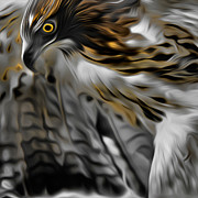 Red Tail Hawk Art - I am Redtail Square by Bill  Wakeley