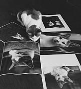 I Am So Photogenic Print by Suzanne Szasz