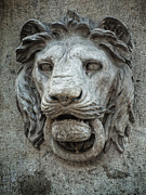 Lion Gargoyle Prints - I Am the Guardian - Hear Me Roar Print by Lucinda Walter
