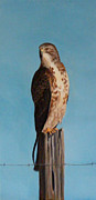 Red-tailed Hawk Paintings - I Am the Hawk by Sky Painter