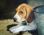 Foxhound Framed Prints - I Didnt Do It Framed Print by Anita Baarns