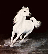 White Stallion Posters - I Dreamed Him White Poster by DiDi Higginbotham