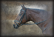 Bay Horse Metal Prints - I Dreamt of Thee Metal Print by Renee Forth Fukumoto