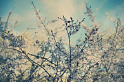 Cherry Blossom Metal Prints - I Hope Spring Will Be Kind Metal Print by Laurie Search