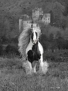 Gypsy Horse Prints - I hope youre in a Beautiful Place Print by Fran J Scott