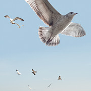 Seagull Digital Art Metal Prints - I Just Want To Fly Metal Print by Bill Cannon