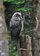 Owlet Photos - I Know Youre There by Randy Hall
