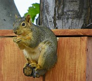 Squirrel Mixed Media - I like it - Enjoying a Well Deserved Snack by Photography Moments - Sandi