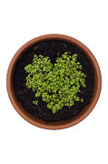 Tiny Leaves Prints - I Love Cress Print by Anne Gilbert