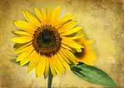 Sabrina L Ryan - I Love Sunflowers